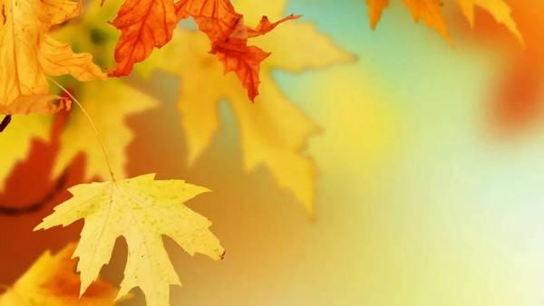 应节气,立秋艾热灸贴敷要贴这些地方